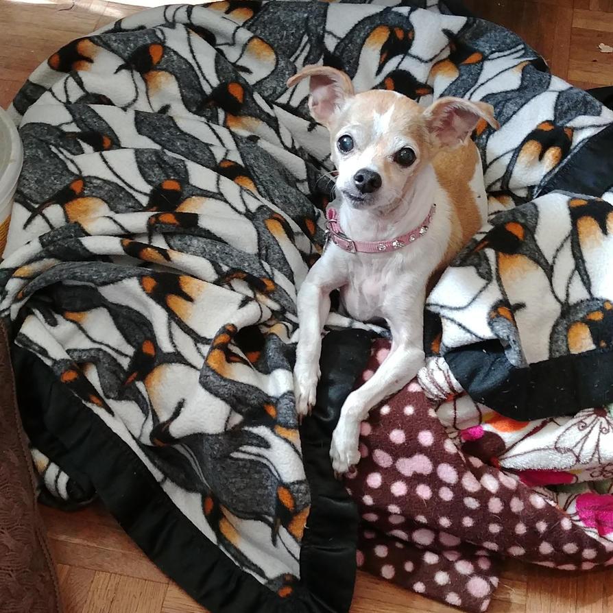 Big blanket for a little girl by lestnill