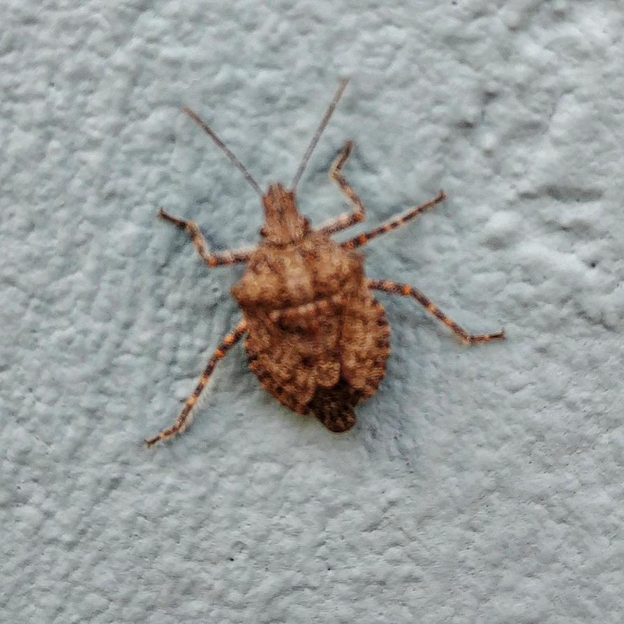 Bug by lestnill