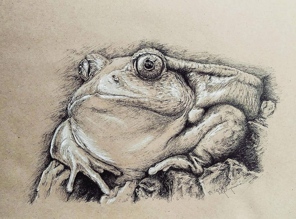 Frog Commission by Concini