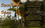 Sunflower Sage