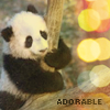 Panda icon: 'Adorable' by clouded-logic