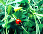 LadyBug . .