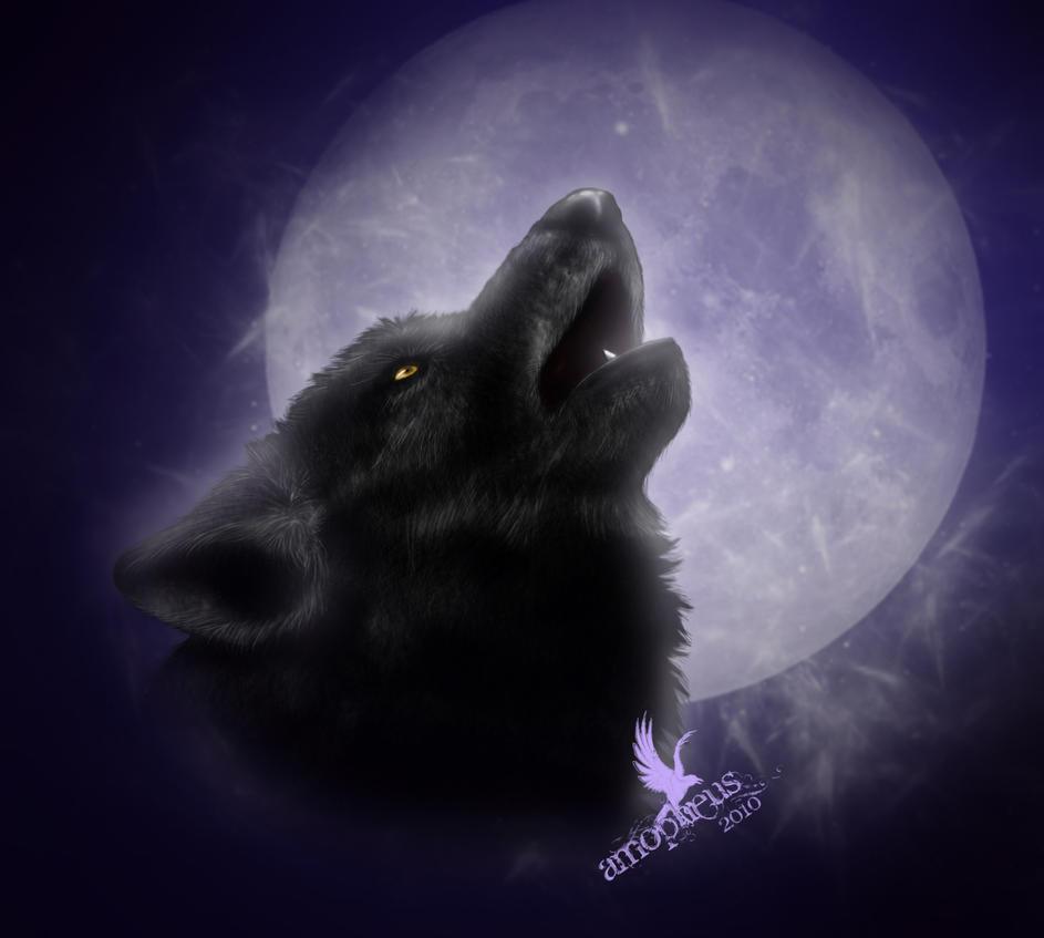 Dolphus the Great Brute _______black_wolf________by_stubborn_egoist-d373lwl