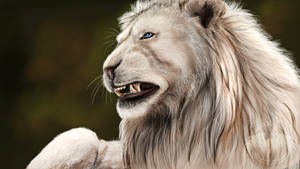 ...::: White Lion SP