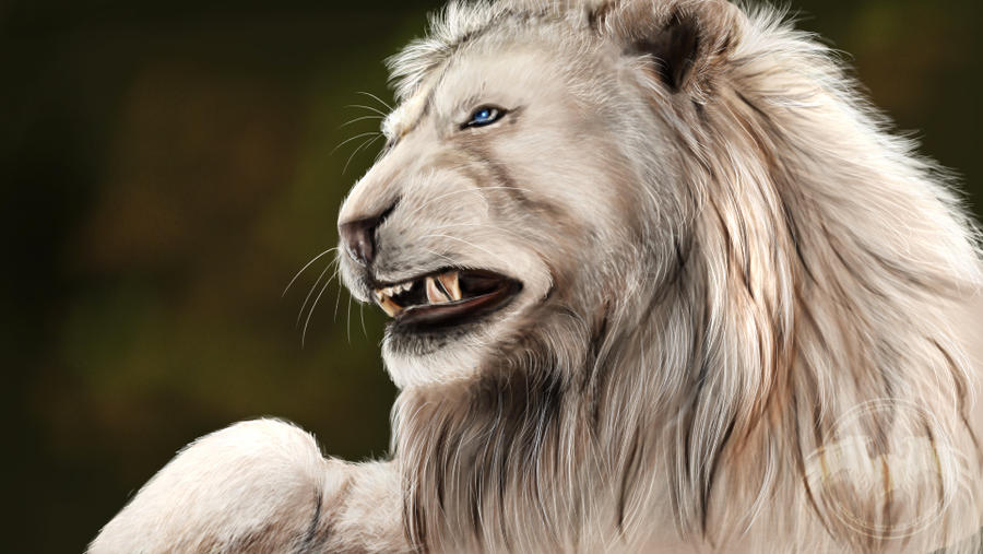Baby white lion with blue eyes