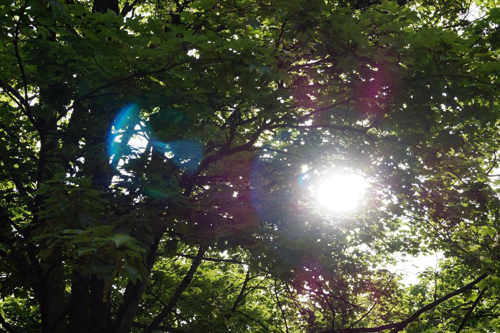 Sunlight by Artali-Artist