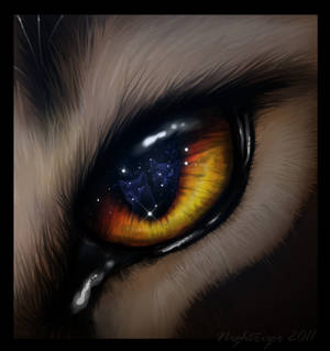 Through the Warriors Eye