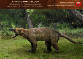 Amphicyon major by RomanYevseyev