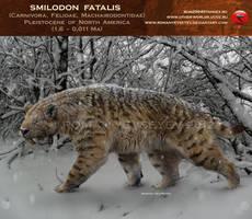 Smilodon fatalis (winter smilo2) by RomanYevseyev