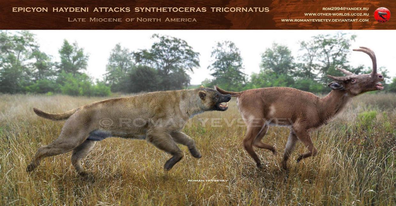 Epicyon haydeni attacks Synthetoceras tricornatus by RomanYevseyev