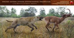 Epicyon haydeni attacks Synthetoceras tricornatus