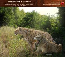 Smilodon fatalis by RomanYevseyev