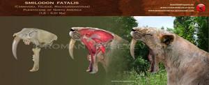 Smilodon fatalis head restoration by RomanYevseyev