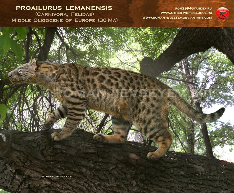 jaguar vs tiger