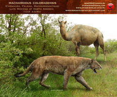Machairodus coloradensis by RomanYevseyev