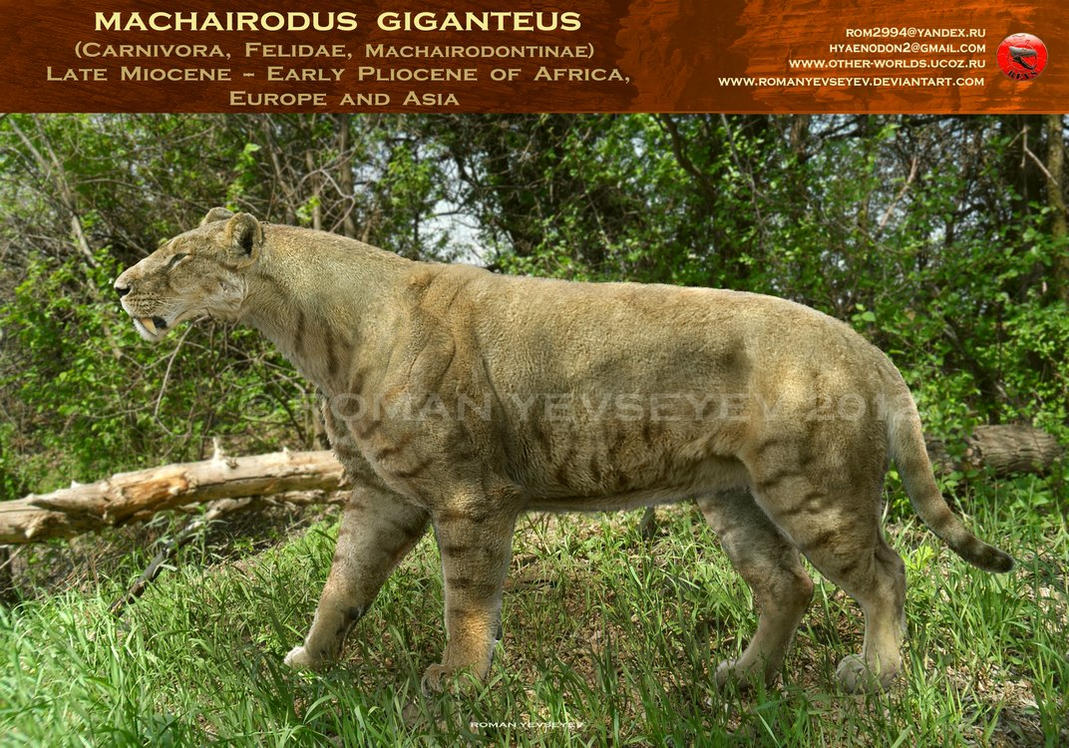 Machairodus giganteus by RomanYevseyev
