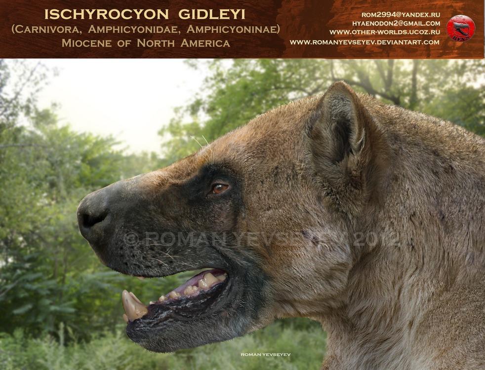 Ischyrocyon gidleyi head by RomanYevseyev