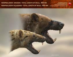 Hemipsalodon viejaensis-grandis