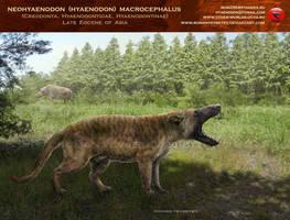 Neohyaenodon (Hyaenodon) macrocephalus by RomanYevseyev