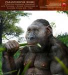 Paranthropus boisei feeds