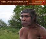 Homo ergaster (knm-er 3733)