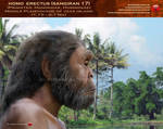 Homo erectus (sangiran 17)