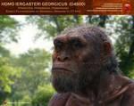 Homo georgicus (Dmanisi 5)