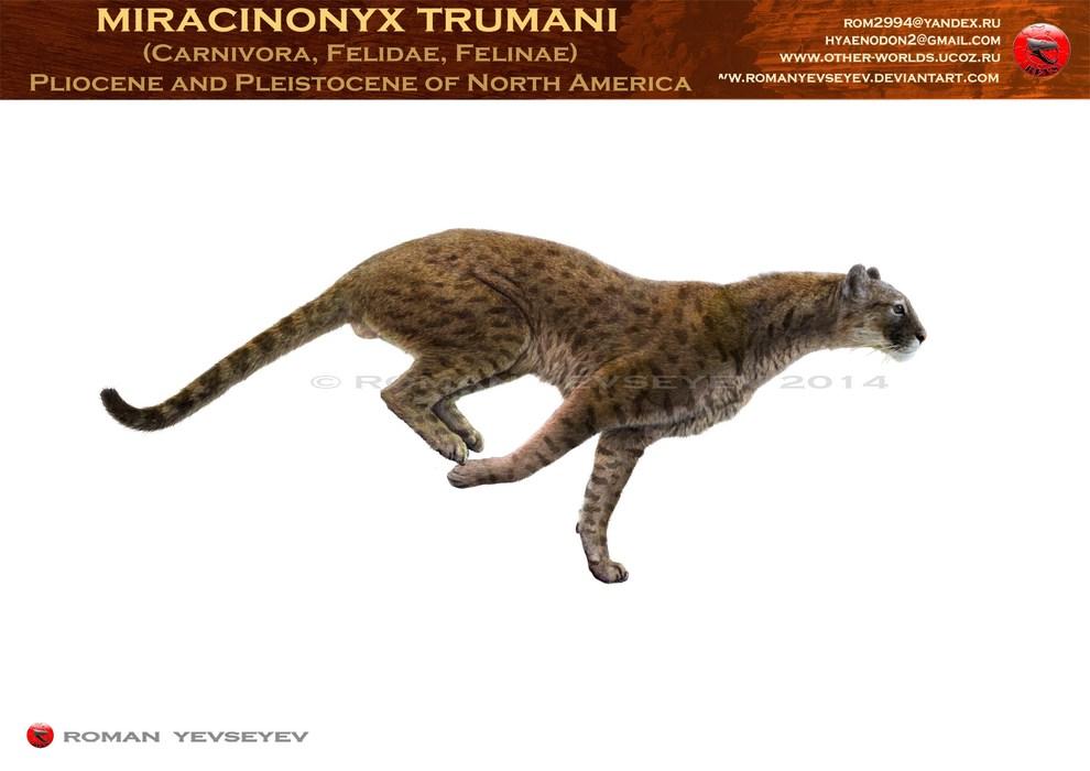 miracinonyx trumani by romanyevseyev on deviantart