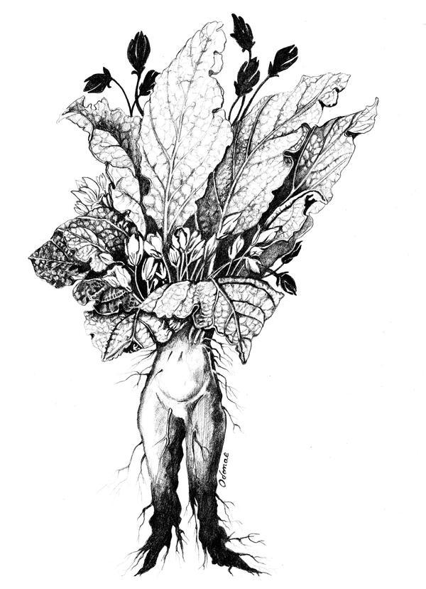 Mandragora by LauraLambert