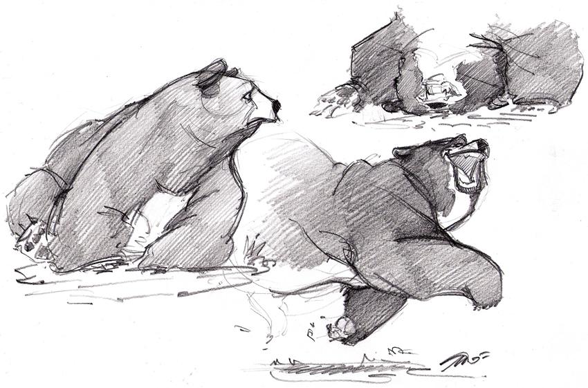 bear by nicolasammarco