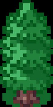 Evergreen A 16x32