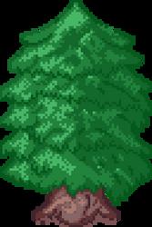 Evergreen B 64x96