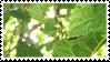 leaf stamp by taishokun