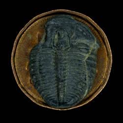 Little Trilobyte