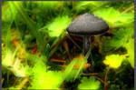 Mushrooms 001a