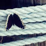 Sailorfly by GreaLauren