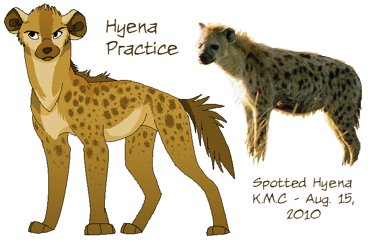 Spotted Hyena Practice By Lilgreentraveler On Deviantart