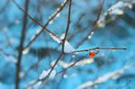 Snow by danielle06