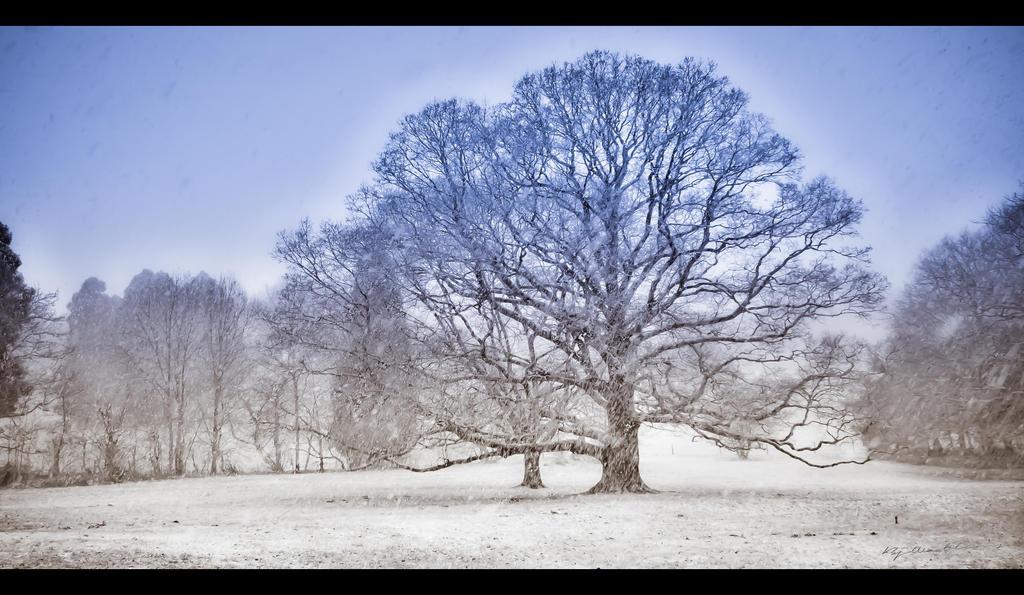 Winter Wisdom Tree by BenoitJWild