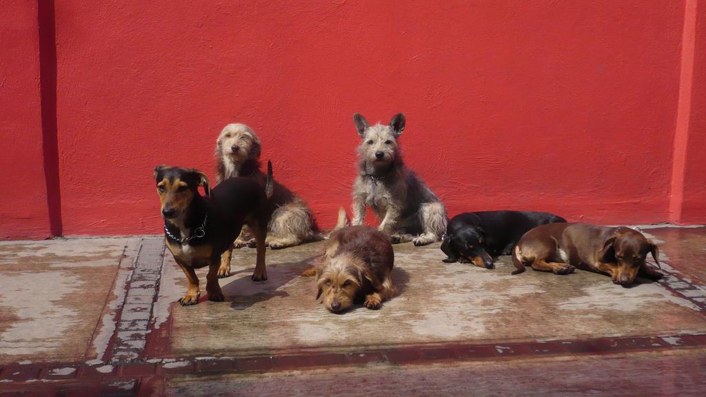 Dog Family by CosmicPonye
