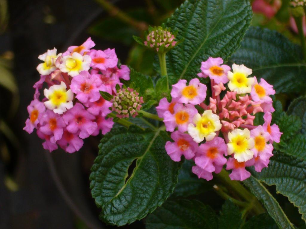 Flowers by CosmicPonye