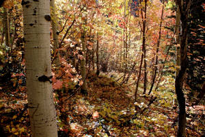 Wasatch in the Fall by Ericseye