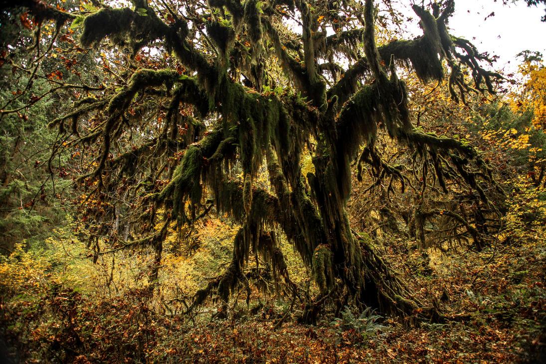 Halloween Tree by Ericseye