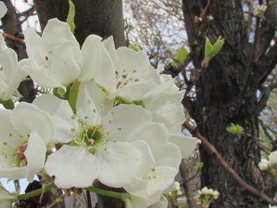 Blooms by fairyfur12345