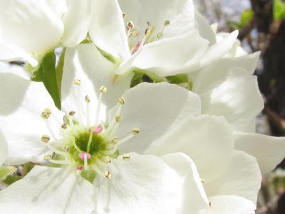 Spring Is Here by fairyfur12345