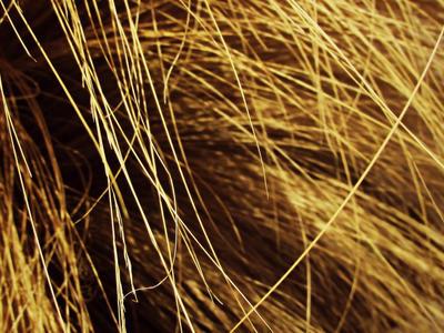 Hair of the Earth by fairyfur12345