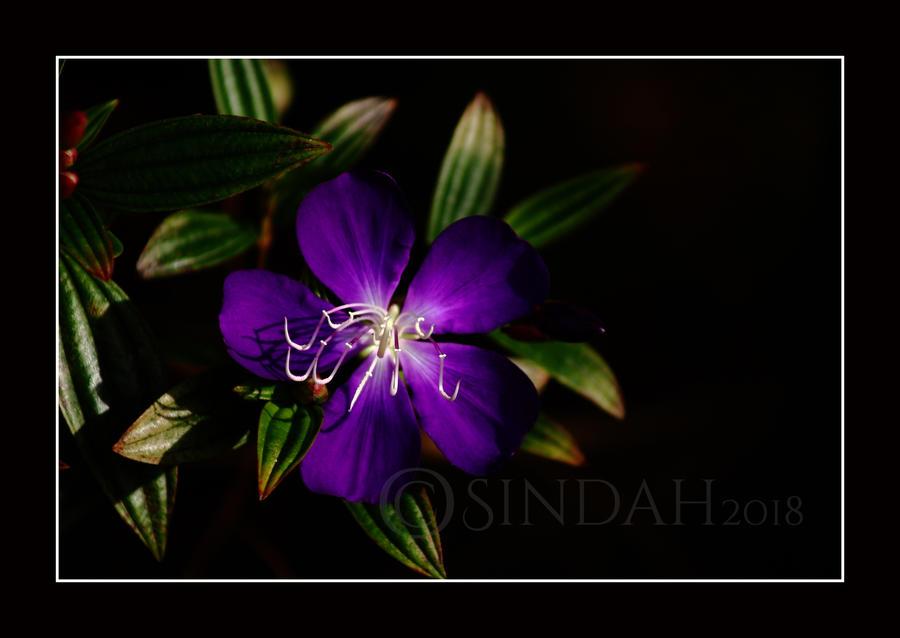 Blue Flower by Sindah