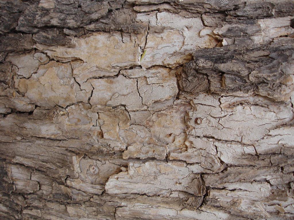 Wood Bark 01