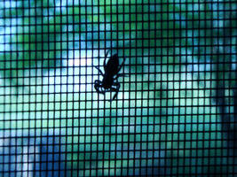 Cyber Bug by skeptomaniacs