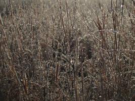 Beaded Grasses by skeptomaniacs